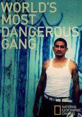Rent World's Most Dangerous Gang on DVD